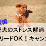 愛犬のストレス解消!ノーリードが可能なキャンプ場【関西編】