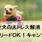 愛犬のストレス解消!ノーリードが可能なキャンプ場【関東編】
