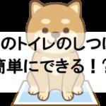 成犬でもトイレのしつけ直しは簡単な方法できます!失敗する理由もお伝えします!