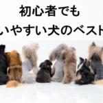 初心者が飼いやすい小型犬ランキングTOP5~ワンコを飼う時のポイントとは!