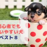 初心者が飼いやすい小型犬ランキングTOP8~ワンコを飼う時のポイントとは!