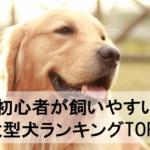 初心者が飼いやすい大型犬ランキングTOP5~ワンコを飼う時のポイントとは!