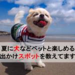 【関東・関西】夏に犬などペットと楽しめるお出かけスポット7を教えてます!