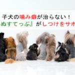 子犬の噛み癖が治らない!『こいぬすてっぷ』が子犬の成長に合わてしつけをサポートしてくれるの?