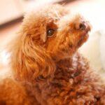 【しつけ】犬と主従関係の作り方や簡単なチェック方法を教えます!