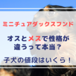 ミニチュアダックスフンドの特徴!性格はオスとメスで違うのって本当?子犬の値段はいくら!