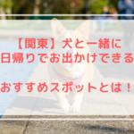 犬と一緒に日帰りでお出かけする関東のおすすめスポットを紹介します!