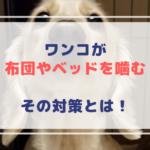愛犬が布団やベッドを噛んでボロボロ!噛む理由って!やめさせる方法や対策を教えます♪