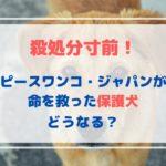 殺処分寸前!「ピースワンコ・ジャパン」が命を救った保護犬はどうなる?